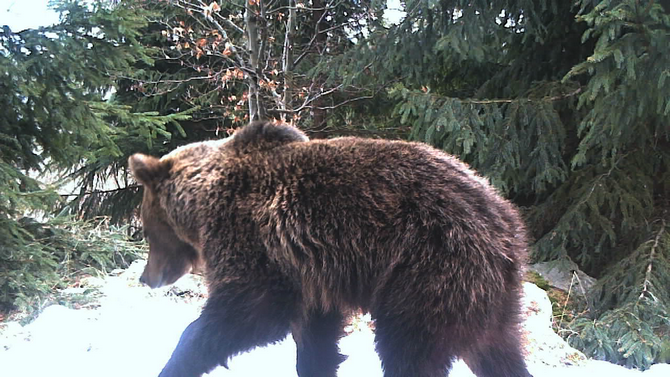 Photo: Camera trap of Vlado Trulík