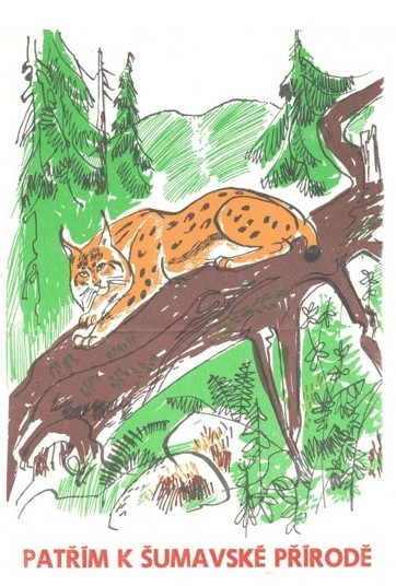 A drawing of Eurasian lynx