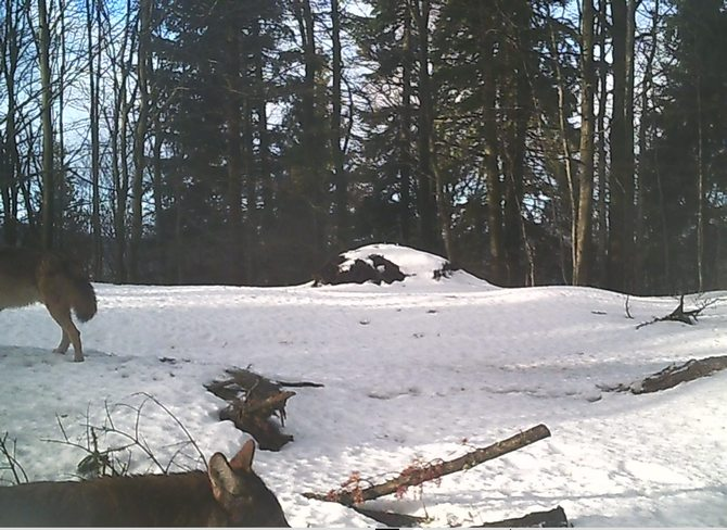 Camera trap of Vlado Trulík