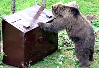 A bear trying to get into a locked waste container