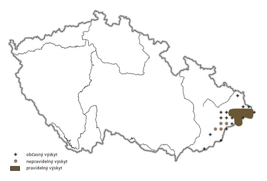 Brown bear distribution in the Czech Republic